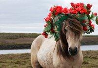 Derby Hat Horse.jpg