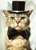 Cat-with-hat.jpg